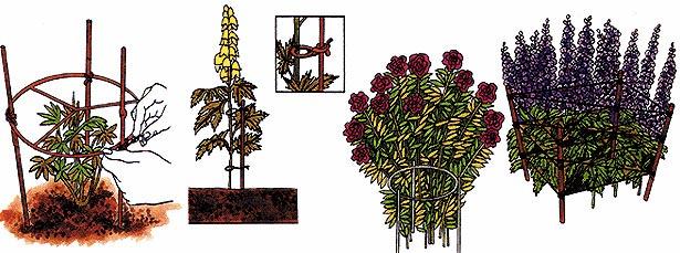 Tipi di sostegni per piante perenni