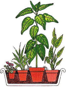 Cura e innaffiatura delle piante di appartamento
