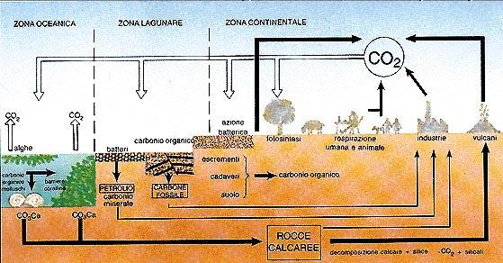 Schema dell'azione della fotosintesi
